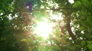 stock-footage-sunlight-coming-through-branches-and-trees-korea-national-arboretum-in-pocheon